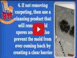 How to get rid of carpet mold